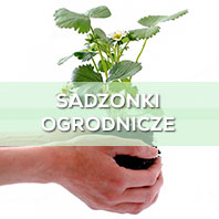 Sadzonki Ogrodnicze
